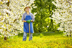 Fleur de cerisier de pissenlit de Spade de jardinier Images libres de droits