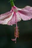 Fleur de chaussure Photo libre de droits