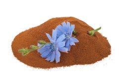 Fleur de chicorée et poudre bleues de chicorée instantanée Photographie stock libre de droits