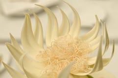 Fleur de chocolat Image stock