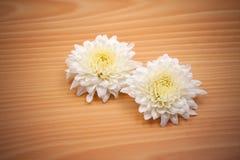 Fleur de chrysanthème de deux blancs sur le fond en bois Photo libre de droits