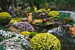 Fleur de chrysanthème Photos stock