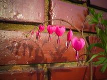Fleur de coeur Images stock
