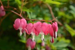 Fleur de coeur Photos stock