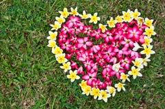 Fleur de coeur sur la cour Images libres de droits