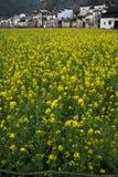 Fleur de Cole Photo libre de droits