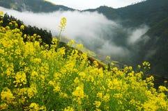 Fleur de Cole Photographie stock
