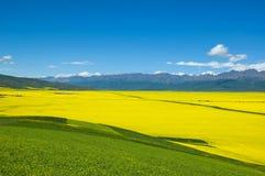 Fleur de Cole, mountan et nuage Photographie stock libre de droits