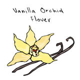 Fleur de cosses ou de bâtons et de vanille d'orchidée de vanille Illustration de vecteur d'isolement sur un fond blanc Main réali Images stock