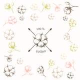 Fleur de coton avec les tampons de coton croisés As Photos libres de droits