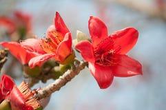Fleur de coton en soie Image stock