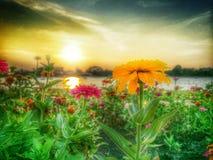 Fleur de coucher du soleil Image stock