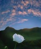 Fleur de coucher du soleil de montagnes Photos libres de droits