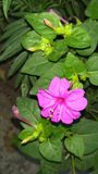 Fleur de couleur Photo stock
