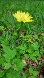 Fleur de couleur de ressort Images stock
