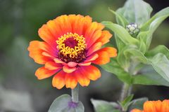 Fleur de couleur orange Photographie stock