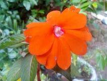 Fleur de couleur rouge Photos stock