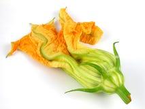 Fleur de courge Photo stock
