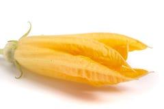 Fleur de courgette d'isolement sur le macro blanc de fond photos stock