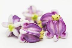 Fleur de couronne Images stock