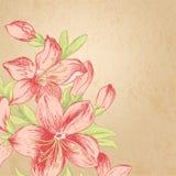 Fleur de cru Images libres de droits