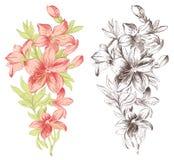 Fleur de cru Photo libre de droits