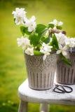 Fleur de cueillette Photographie stock libre de droits