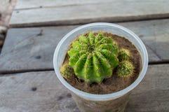 Fleur de désert Image libre de droits