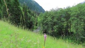Fleur de fleur dans le pré sur un courant de montagne dans des alpes de l'Autriche Vall?e de Zillertal clips vidéos