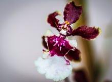 Fleur de danse Image libre de droits