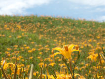 Fleur de Daylily à soixante mountatin en pierre Image stock