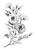 Fleur de dessin de main Image libre de droits