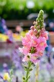 Fleur de digitale Photos stock