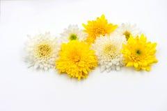 Fleur de disposition sur le blanc Photos stock