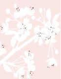 Fleur de durée Photographie stock libre de droits
