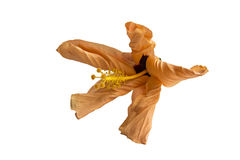 Fleur de effacement lumineuse, feuilles courbées, grande étamine, sur un fond blanc Images stock