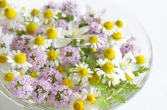 Fleur de fines herbes photo libre de droits