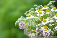 Fleur de fines herbes de source images stock