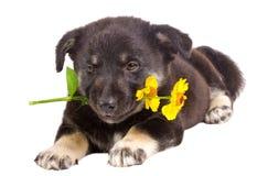 Fleur de fixation de chiot Photo libre de droits