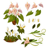Fleur de flamant Images stock