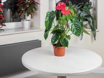 Fleur de flamant Photographie stock