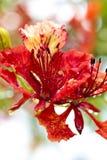 Fleur de flamme Images libres de droits