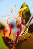 Fleur de flamme de l'ange Photo stock