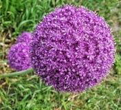 Fleur de fleur images stock