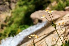 Fleur de fleur blanche contre le contexte d'un courant de montagne Photographie stock