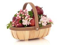 Fleur de fleur d'Apple Photographie stock