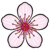 Fleur de fleur de cerise Images stock
