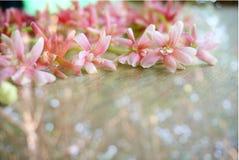 Fleur de fleur de ressort à l'arrière-plan mol de tache floue Images stock