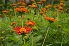 Fleur de fleur et fond oranges de tache floue Image stock