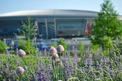 Fleur de fleurs en parc Image libre de droits